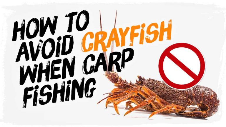 how-to-avoid-crayfish-when-carp-fishing