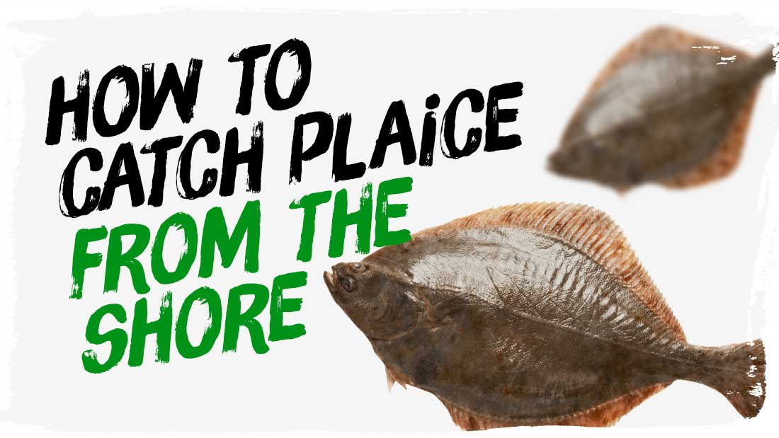 how-to-catch-plaice-from-the-shore