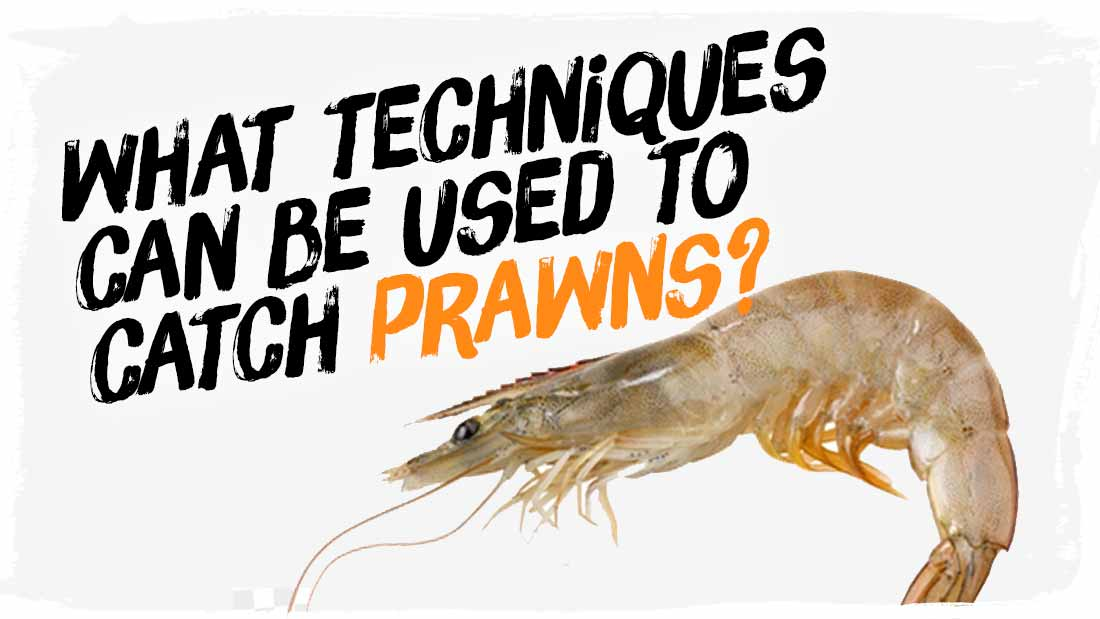 techniques-to-catch-prawns