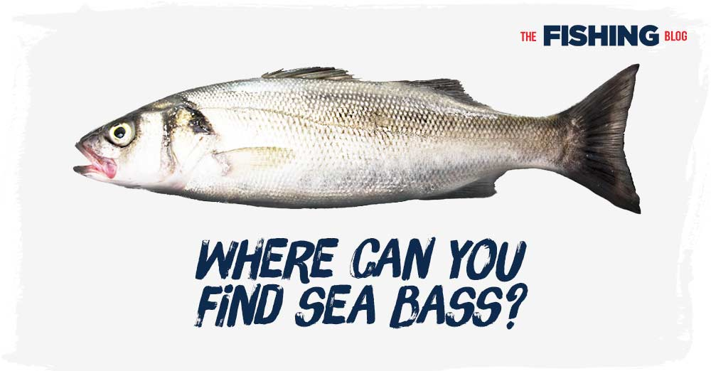 where-can-you-find-sea-bass